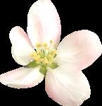 NLD Pink Flower (5).png