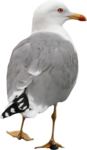 ldw_UnderPalmTree_seagull.png