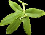Lemony-freshness_elmt (33).png