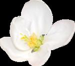 Lemony-freshness_elmt (40).png
