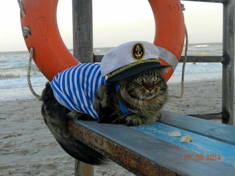 касается остальных фото прикол моряка победительницей гонки