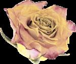 valentina_shabbyfall_el15.png