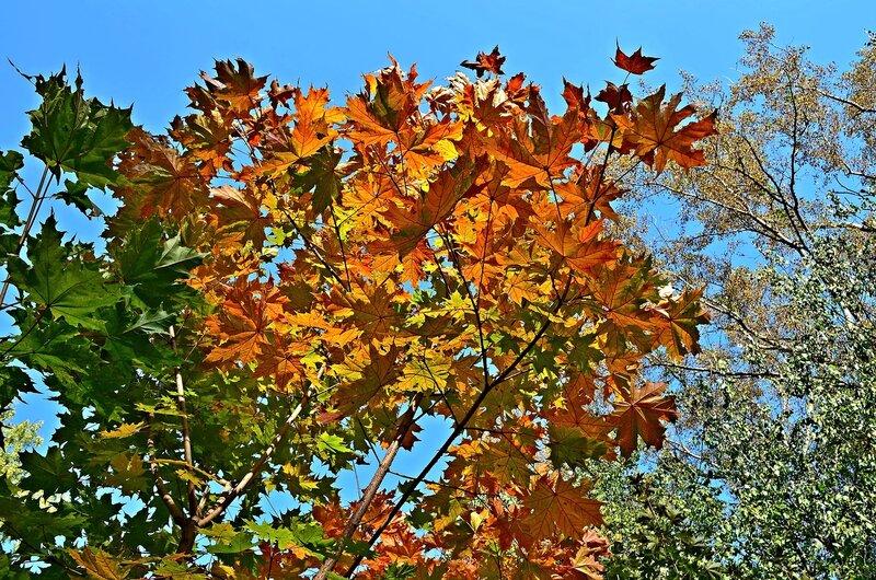 Осенняя палитра.jpg