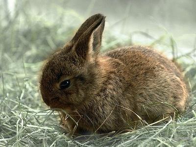 гигиена содержания кроликов