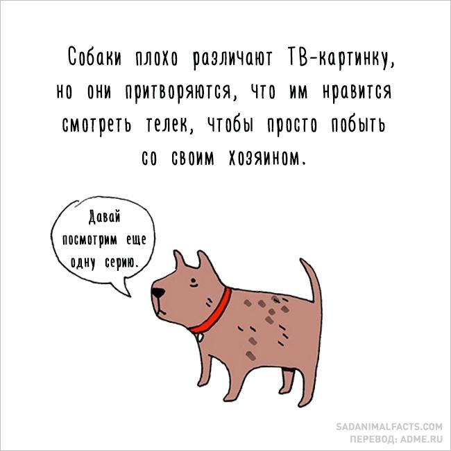 sobaki_ploho_razlichayut.jpg