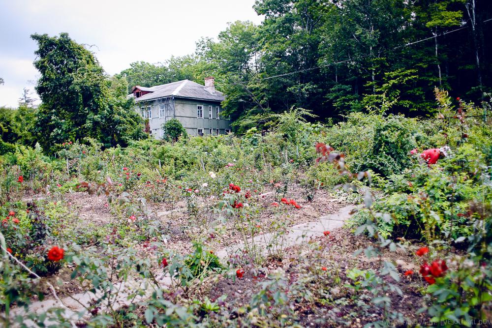 Купить цветы и кустарники ботанический сад владивосток, форме