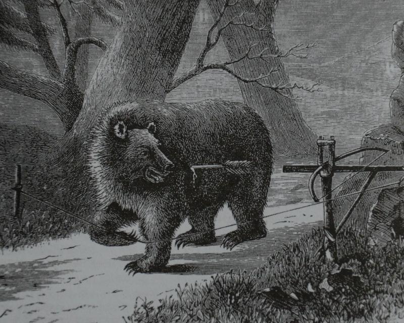 медведь раненый из самострела.jpg