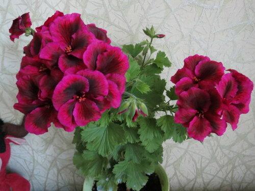 Полезные советы по уходу за комнатными цветами