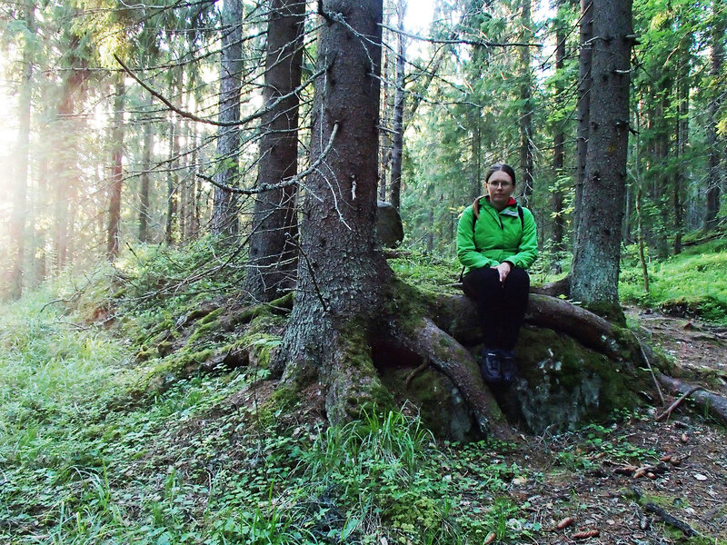 корни елей в парке Ваарунвуорет (Vaarunvuoret)