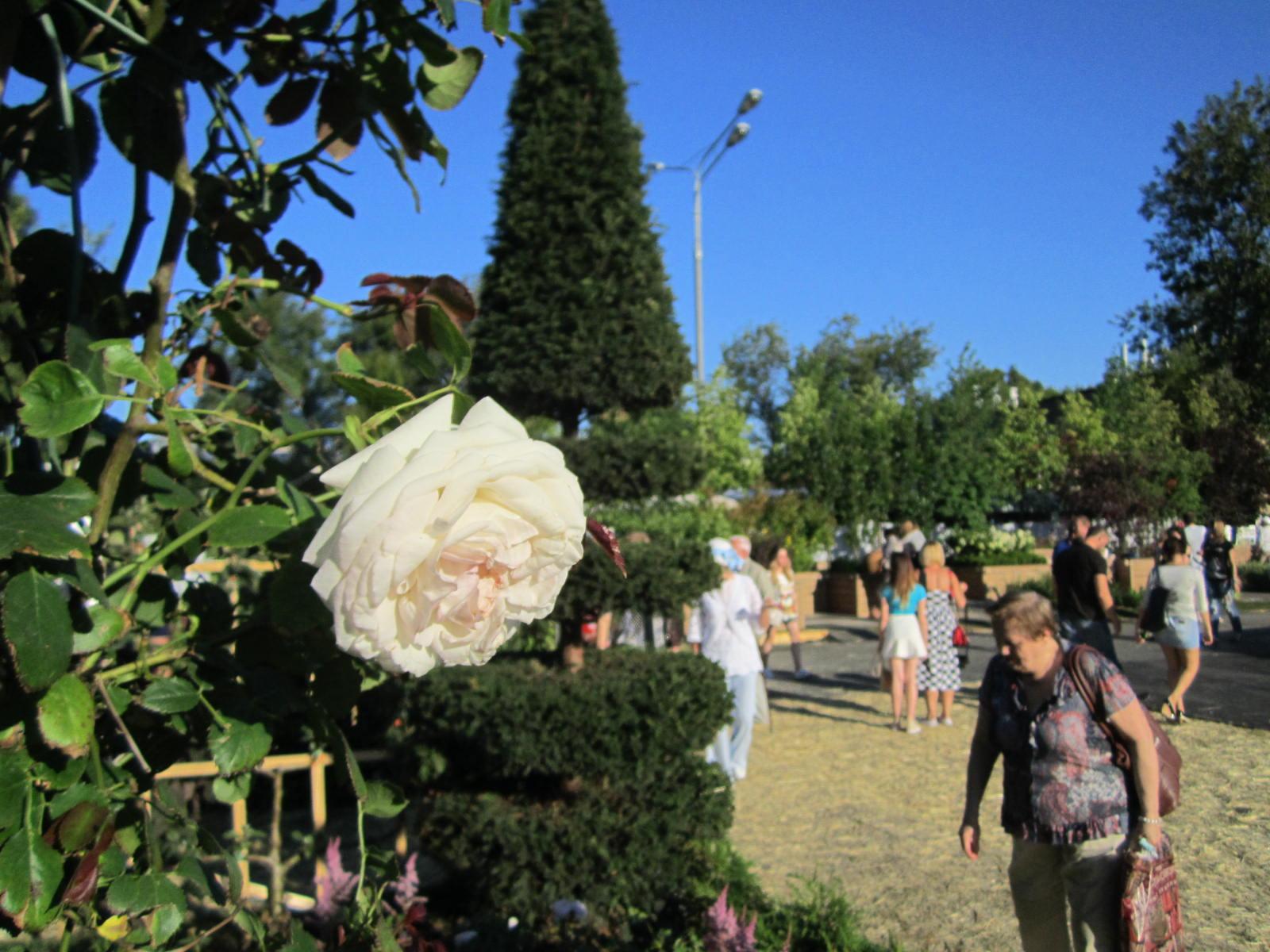 C 6 по 13 июля пройдет Moscow Flower Show картинки