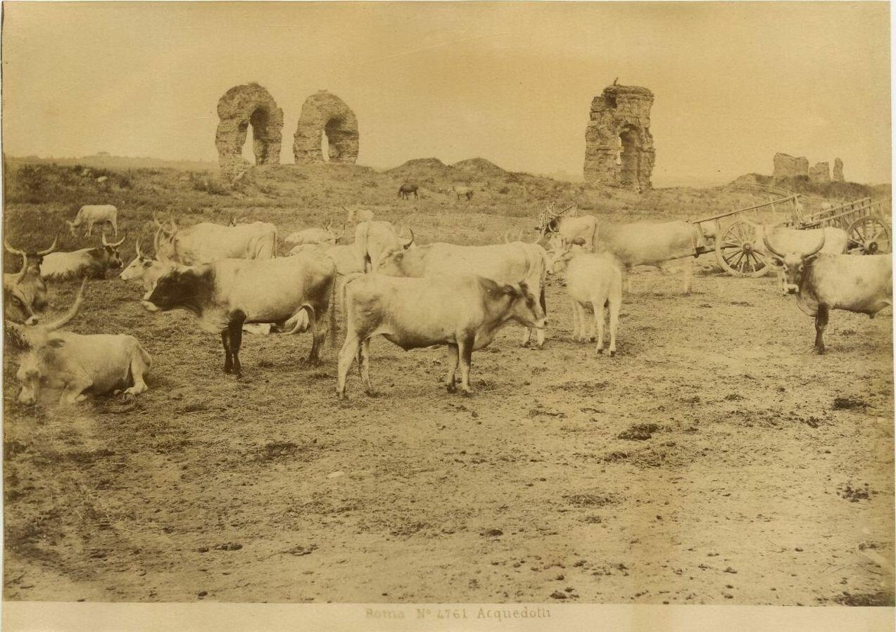 Акведук. 1875