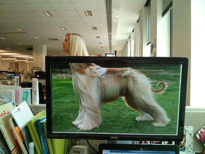 Office Safari_1280.jpg