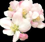 NLD Pink Flower (4).png