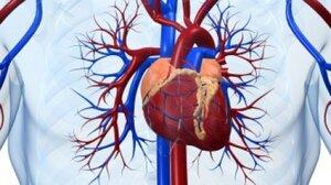 Север Молдовы лидирует по сердечно-сосудистым заболеваниям