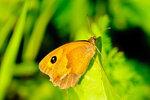 Бабочка в лучах полуденного солнца.jpg