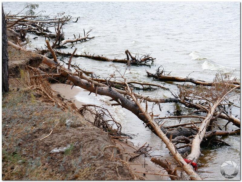 Колония ласточек-береговушек. Фотовзгляд на Тольятти