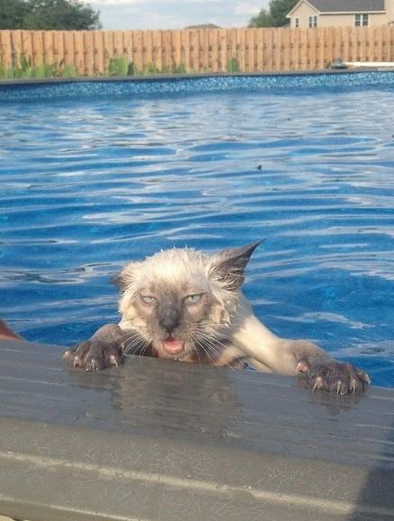 кота искупали в бассейне