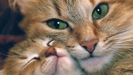 С котёнком