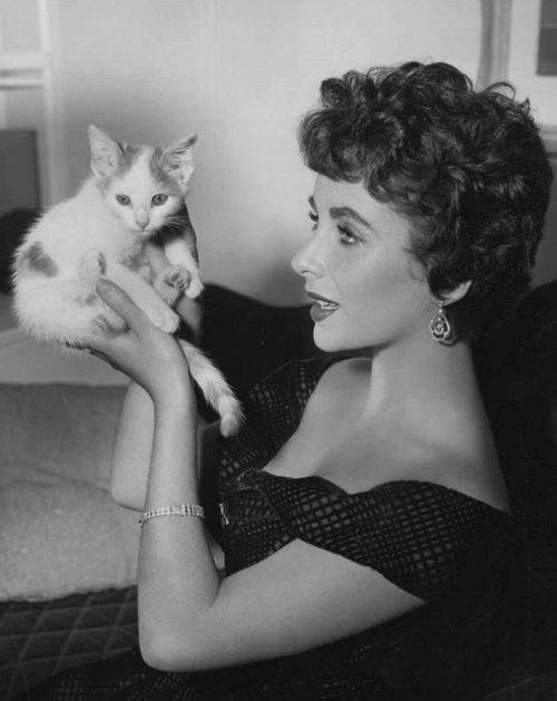 Элизабет Тейлор с кошкой