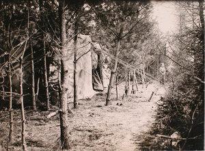 Вид замаскированного ангара в лесу.