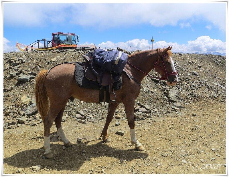 Конь живой и конь железный.