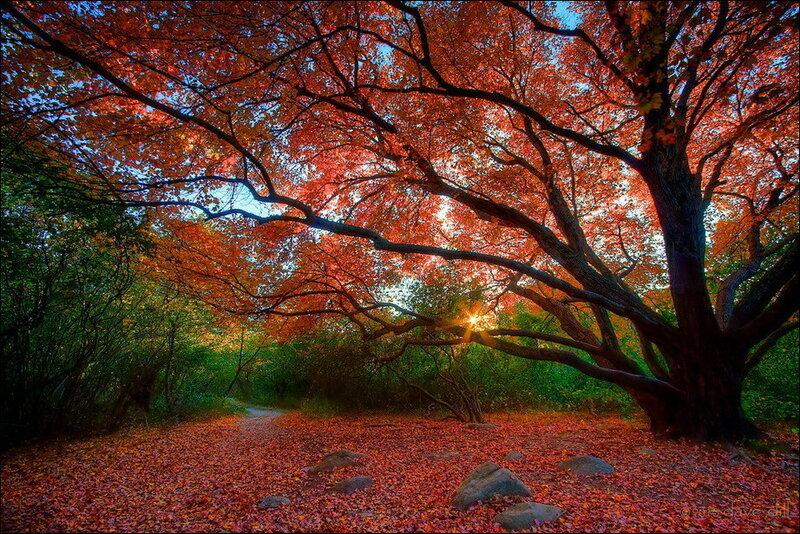 Расплескала осень краску позолоты