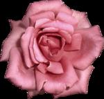 Vintage_Roses_Lilas_el (38).png