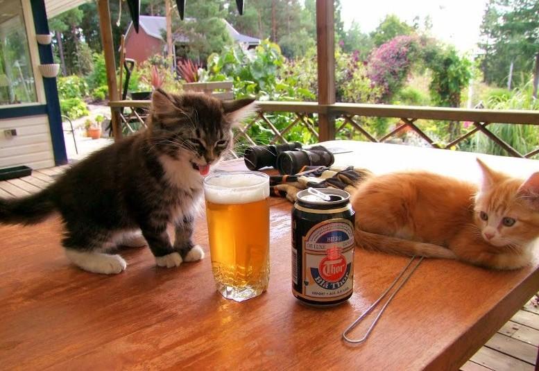 коту не понравилось пиво