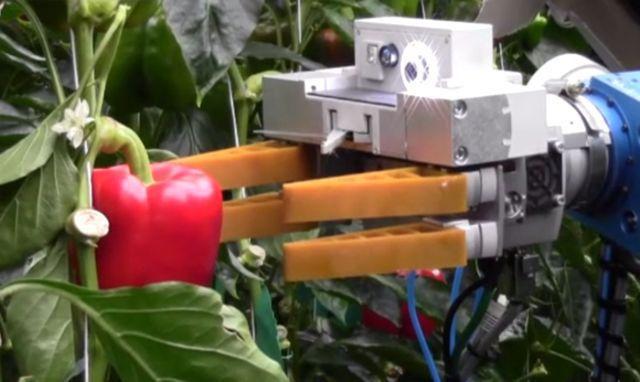 robot-pepper-picker.jpg