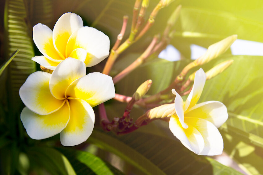 цветок в египте