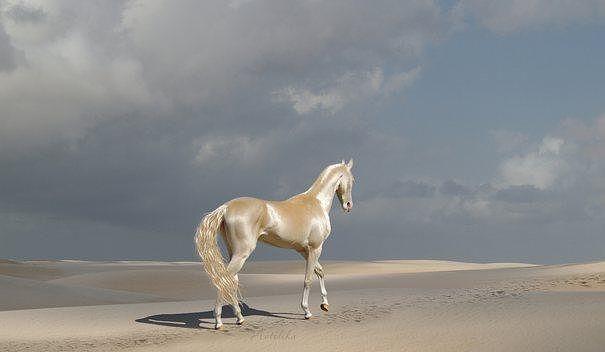 """Лошадь породы """"Изабелла"""" . Именно таких лошадей Крутиков выводил на арену """"Гиппо-паласа"""""""