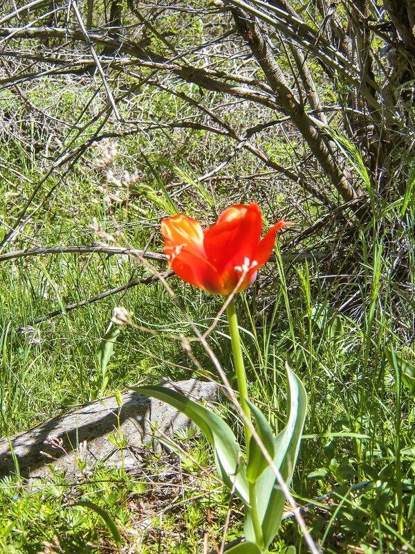 Кызылата | Май | 2014