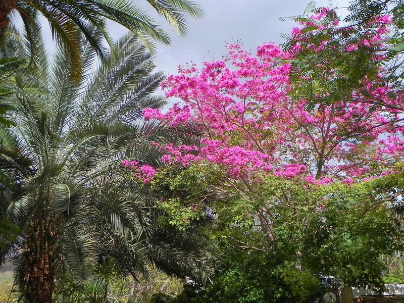 "Ботанический сад кибуца ""Эйн Геди"""