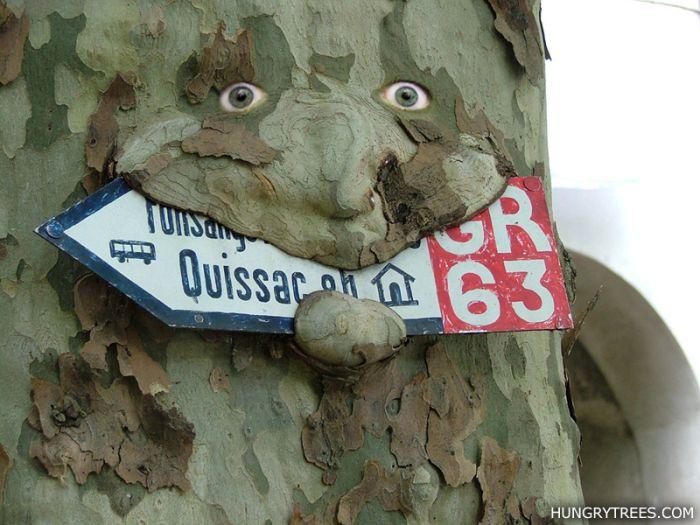 Вывеска, съеденная деревом