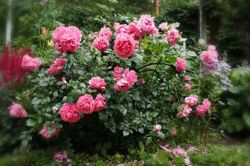 Чудесный сад, его цветение!