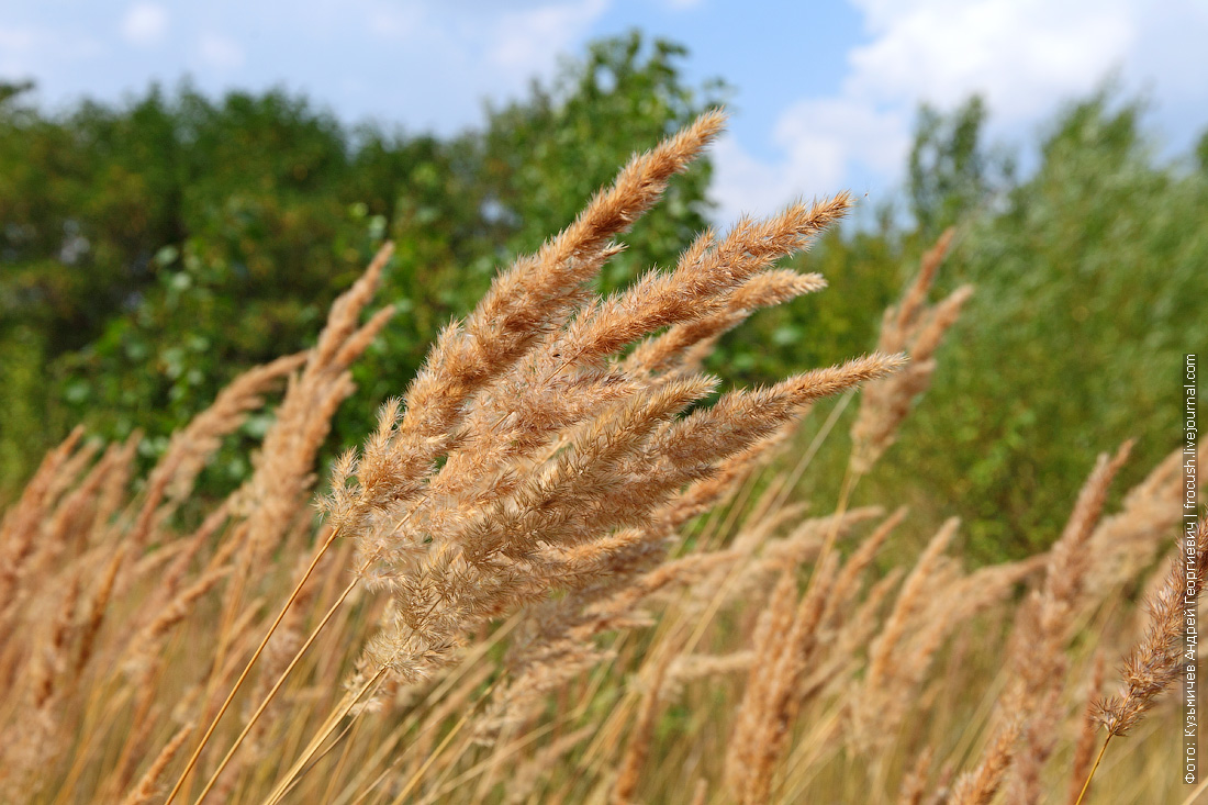 трава на острове Бобровый