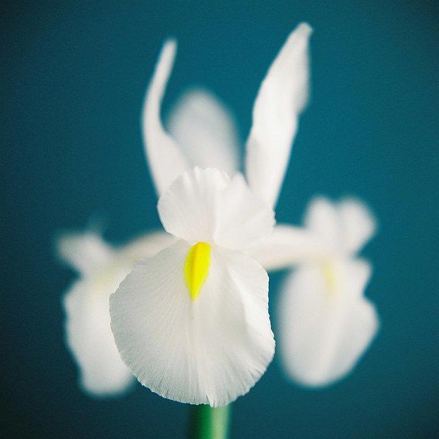 Send no flowers, Kumiko Sekiguchi0.jpg
