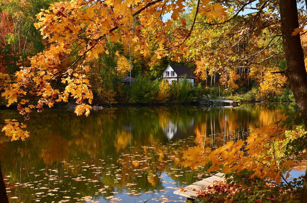 В осеннем парке тополя прощаются с листвой