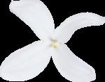 ldw_UnderPalmTree_flower-white4.png