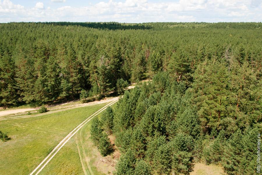 лес фото