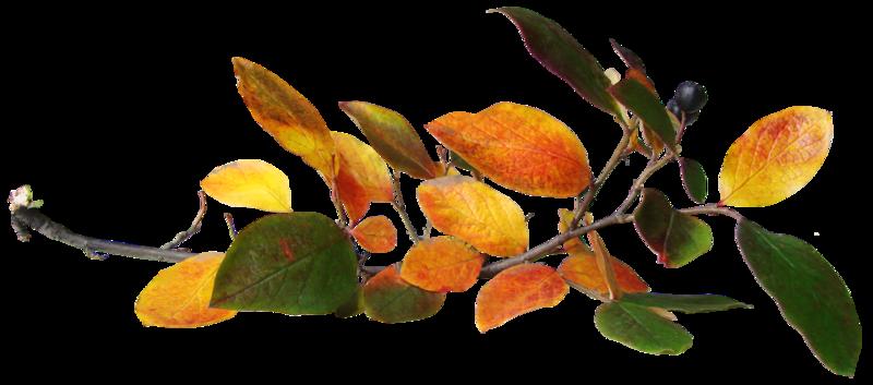 sarayane_autumnfeeling (46).PNG