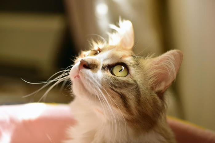 Красивые фотографии пользователей Flickr.com