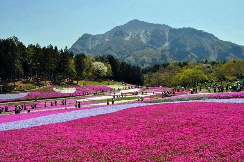 Цветущий розовым японский парк Хицудзияма. Фотографии 0 141acd 979b0080 orig
