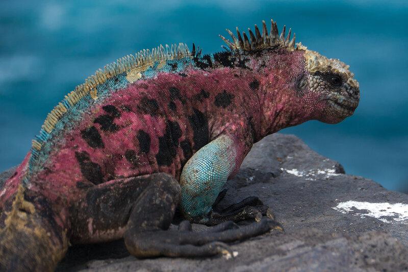 http://www.ontdek-ecuador.be/galapagos/eilanden/espanola.html