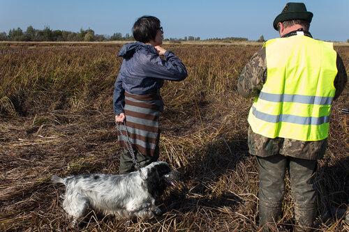 Испытания по болотной дичи 26.09.2014 года 0_b2ac4_2a5a2f74_L