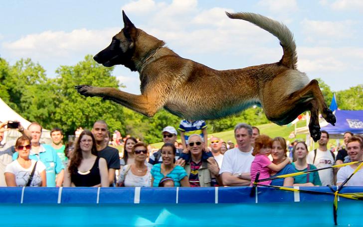 Собачий дайвинг: только для решительных псов (10 фото)