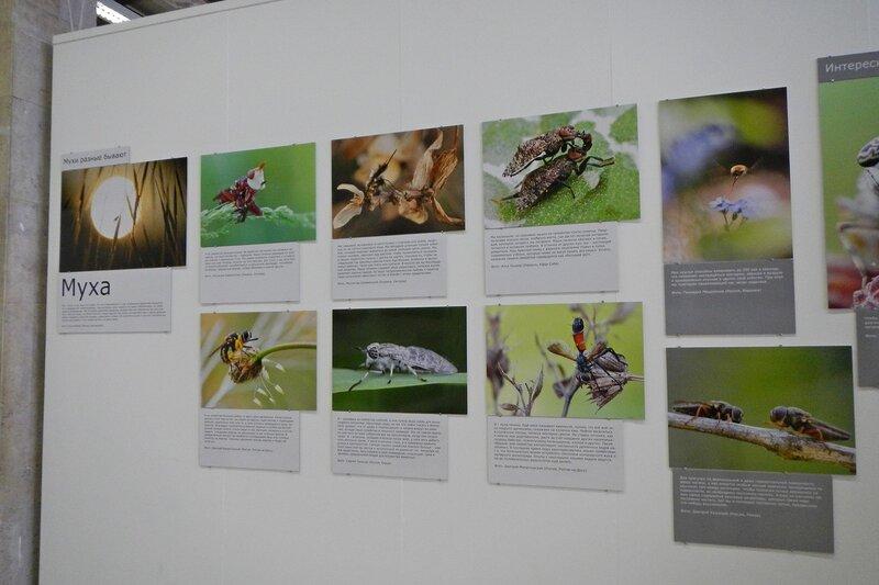 На фестивале дикой природы Золотая Черепаха. Выставка, посвященная мухе.