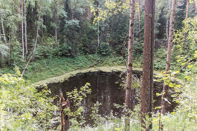 Воронка с водой в Медведском бору рядом с карстовым озером Чваниха («Провалы»)
