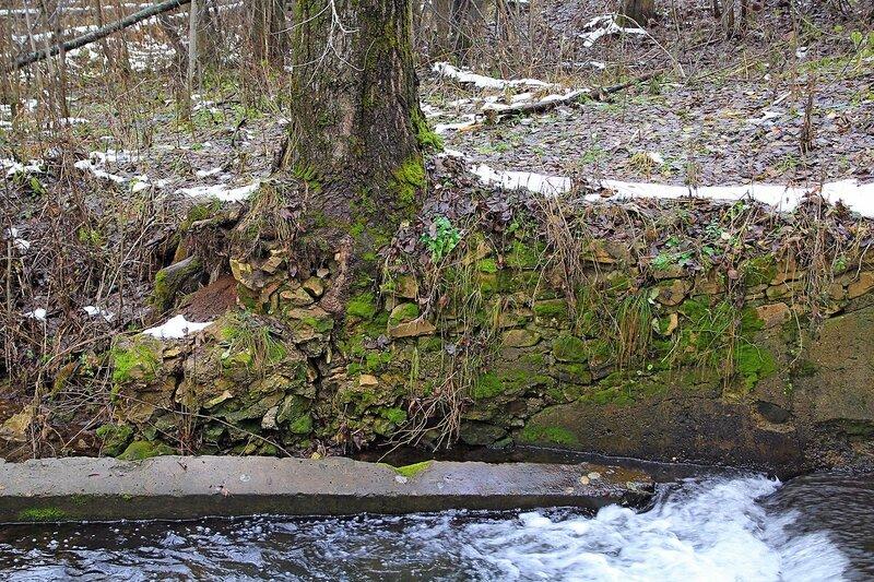 Старая, заросшая мхом каменная кладка с проросшим сквозь неё деревом у водосброса пруда на реке Плоской в Коминтерне