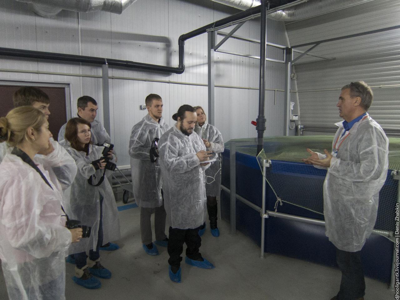 Как разводят осетров в Саратовской области